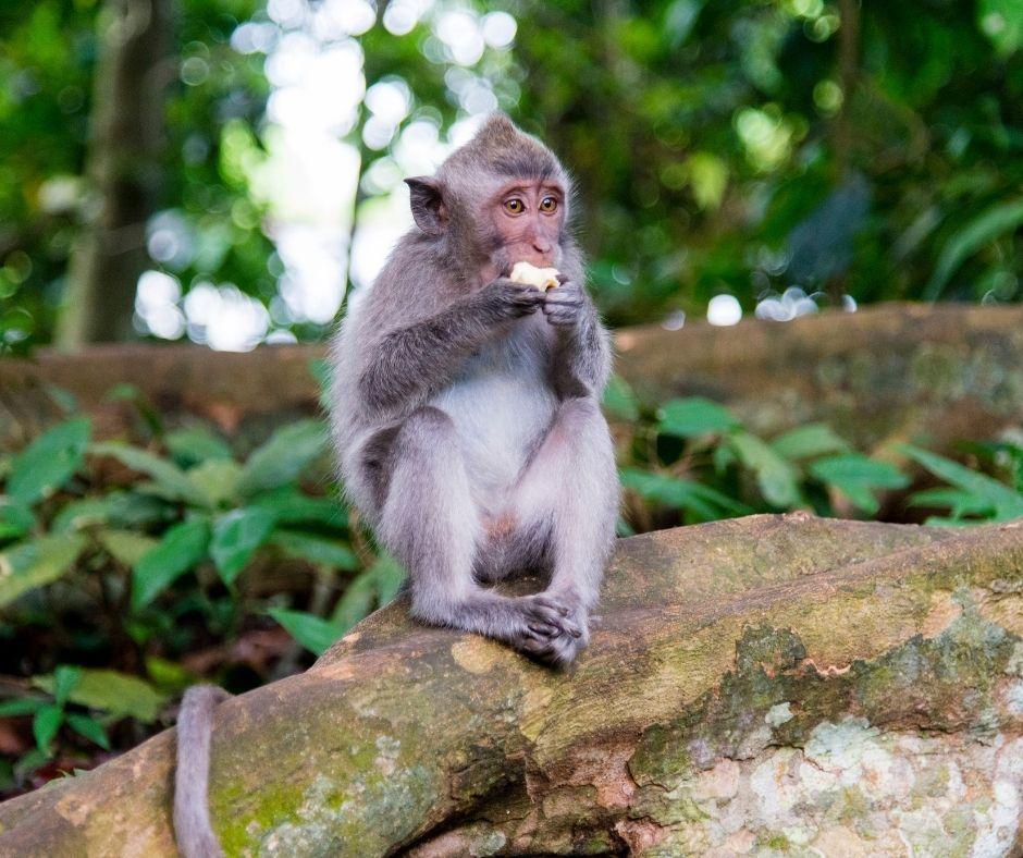 You are currently viewing Wenn die Affen die Führung in deiner Familie haben! (Anders, als du denkst.)